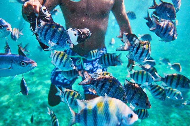 Sub Marine Beauty   – Destino – Mexico