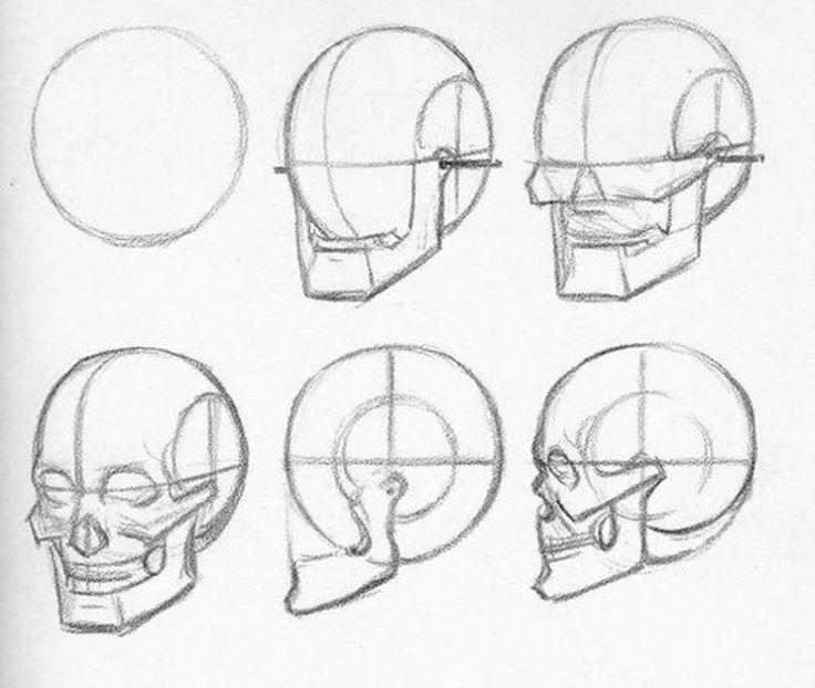 рисуем картинки карандашом поэтапно череп симметрия обычна для