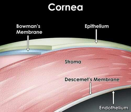 Layers of the cornea - missing Dua ' s layer