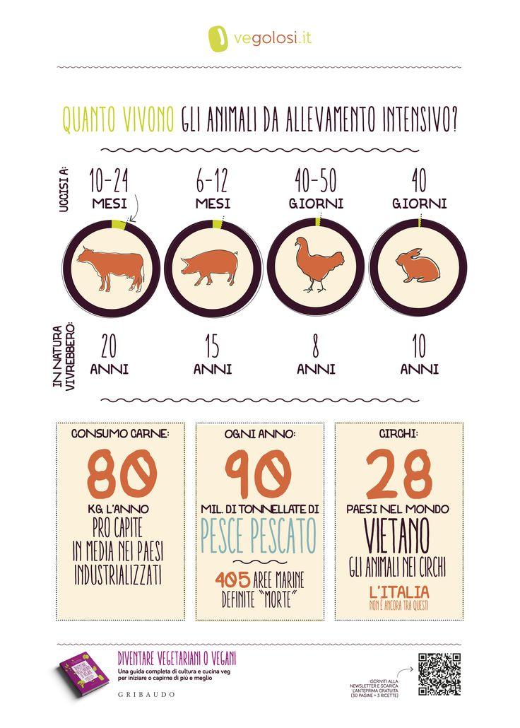 """Quanto vivono gli animali da allevamento? """"Diventare vegetariani o vegani"""", Vegolosi.it - ed. Gribaudo. Per info: http://www.vegolosi.it/libri/diventare-vegetariani-o-vegani-libro-vegolosi/ Per acquistarlo: http://amzn.to/2a44TWr"""