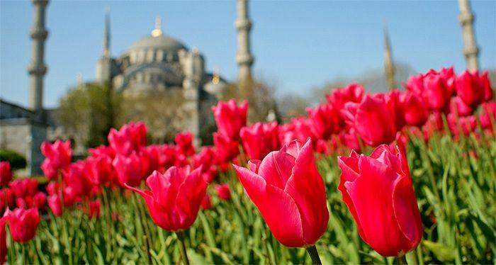 Апрельский #фестиваль тюльпанов в #Стамбуле 2016