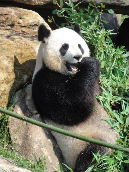 Le zoo de Beauval ? Oui c'est géant, et pas que pour les pandas ! - Lucky Sophie, blog maman, famille nombreuse, bons plans