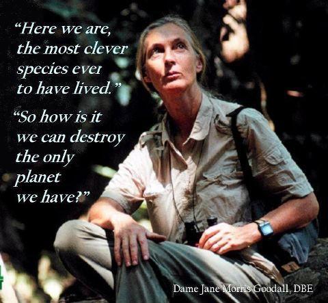 Jane Goodall [british primatologist, ethologist, and anthropologist/UN messenger of peace] <3