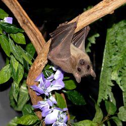 ...Prophet Animal, Words Sanctuary, Beautiful Bats, Bats Words, Fruit Bats, Insects Pest, Insects Control, Animal Birds, Bats Contribute