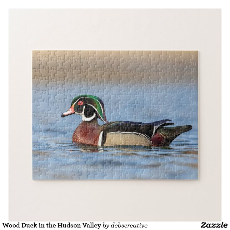 Wood Duck In The Hudson Valley Jigsaw Puzzle Zazzle Com Wood Ducks Jigsaw Puzzles Jigsaw