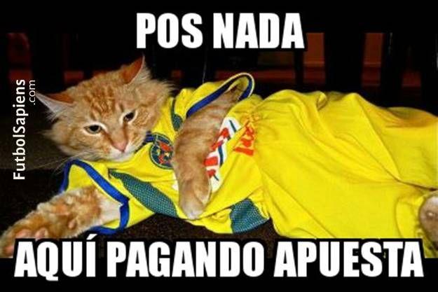 Memes-de-America-vs-Pumas-gato-2.jpg (625×417)