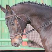 SE VENDE CABALLO KWPN en venta en Andalucía :: HE403864B