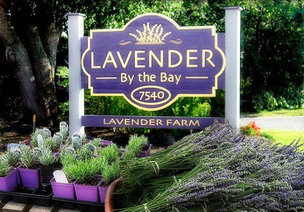 Lavender By The Bay | Lavender by the Bay has been growing the highest quality lavender on Long Island for more than 15 years. We offer fresh cut bunches (when available) ,dried lavender, lavender plants, lavender sachets and crafts, and honey from our own bee hives.