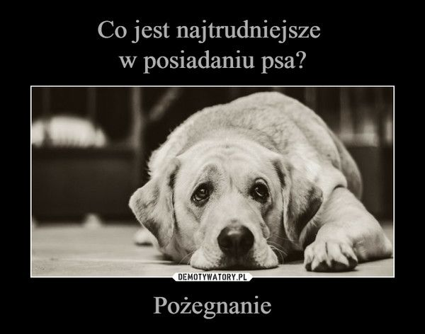 Pożegnanie Psie Cytaty Słodkie Teksty I Mocne Cytaty