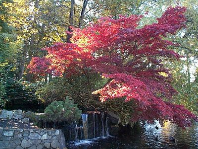 Beacon Hill Park photos, pictures