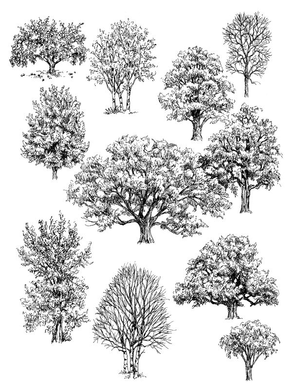 pen and ink drawings of trees...Claudia Nice