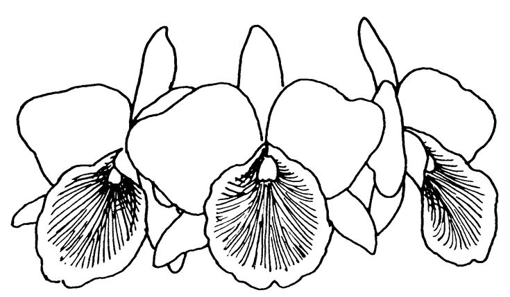 Coloring pages of christmas orchids ~ coloring pages of orchids | Library Clipart Black And ...