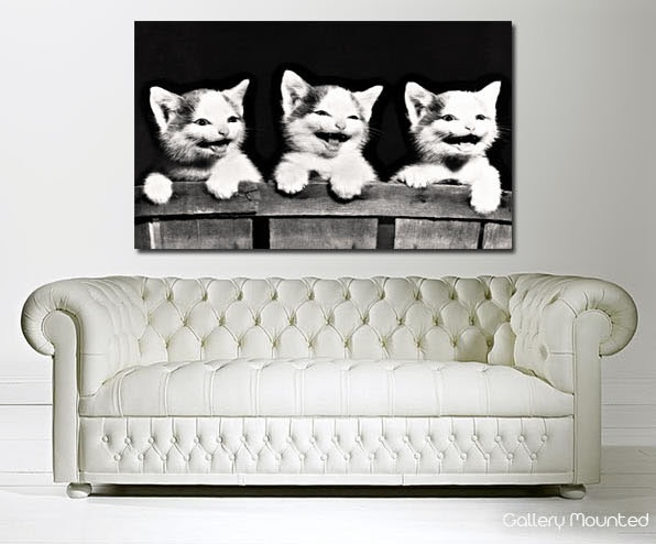 Laughing Kittens http://www.the-canvas-art-shop.co.uk/products/LAUGHING-KITTENS-664120.aspx