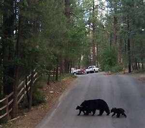 Ruidoso, New Mexico. Been there,seen the bears.