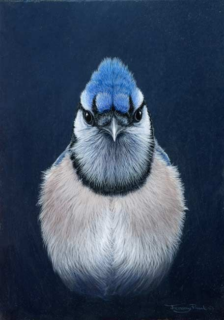 Blue Jay Face Painting