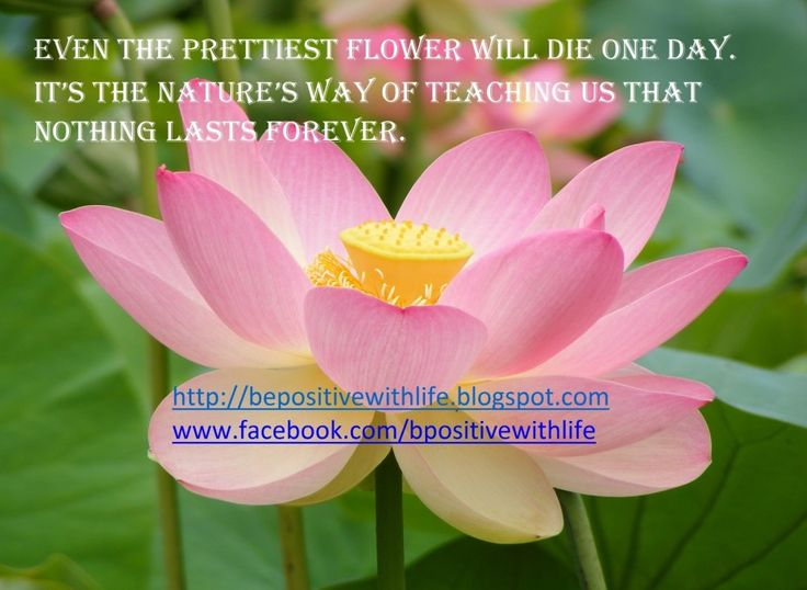 Beautiful Flower Quotes About Life: Be Positive With Life
