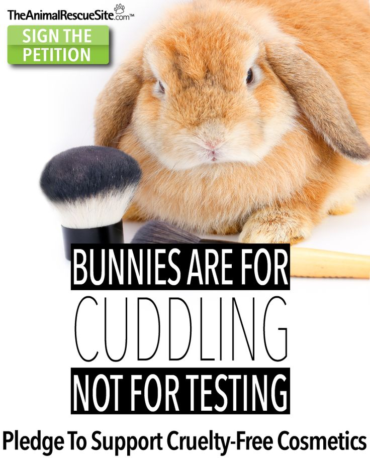animal testing is cruelty and it The topic of whether animal testing should be banned is highly debatable and it draws out mixed reactions from people who support or oppose this activity however, a careful study of this.