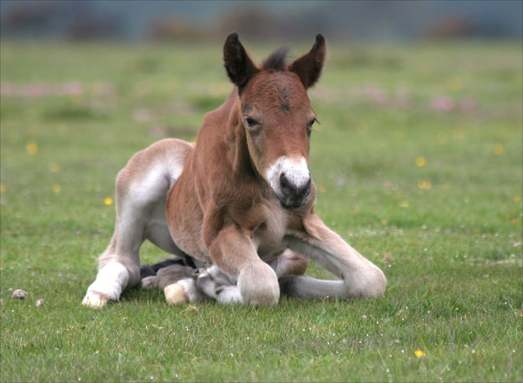 A foal at Whitemoor.