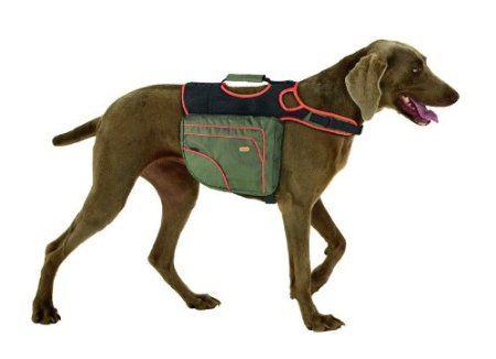 20 besten Lio Bilder auf Pinterest   Haustiere, Hund katze und Hunde