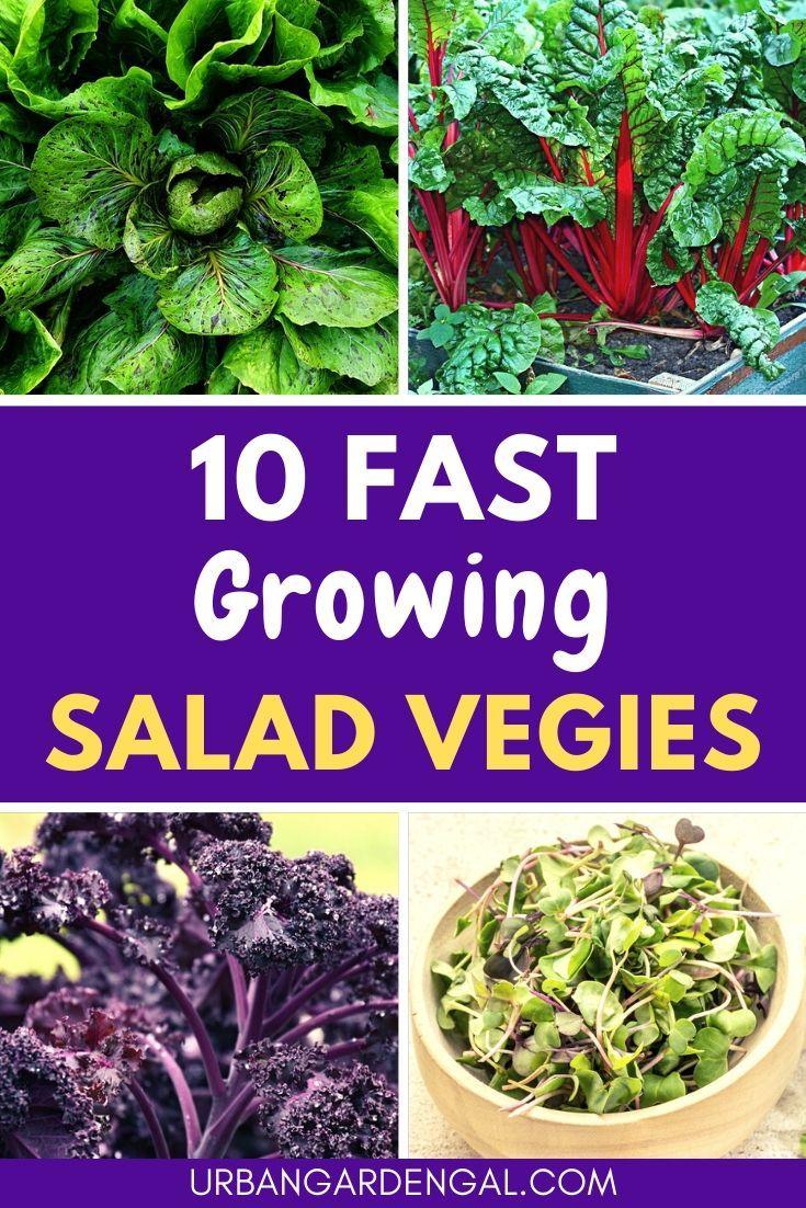10 Fast Growing Salad Vegetables In 2020 Container Gardening Vegetables Growing Strawberries Planting Vegetables