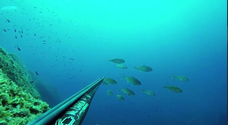 Video Pesca in Apnea: Branco di ricciolette non sparate (Liguria)