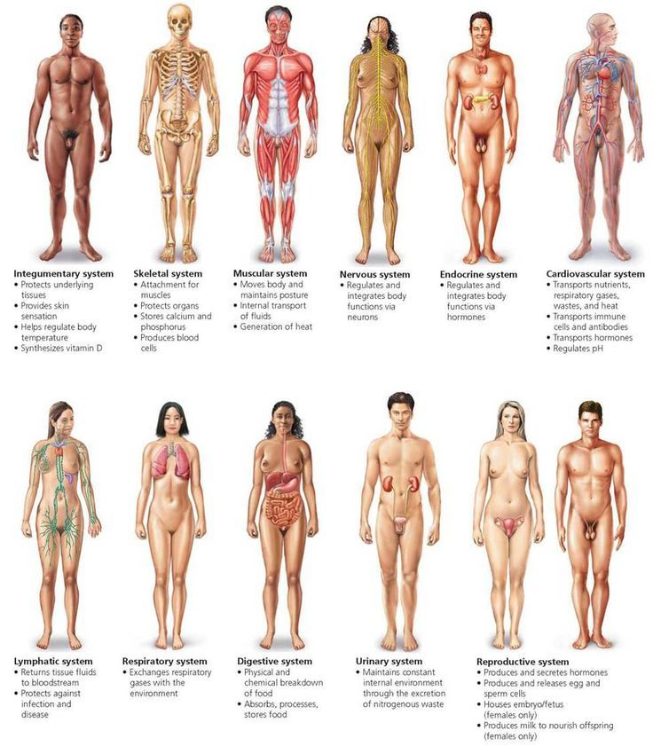 body organization and the integumentary skeletal Chapter 36 skeletal, muscular, and integumentary systems section body structure table of contents section 1 body organization section 2 skeletal system.