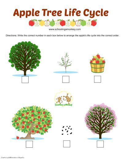 http://www.schoolingamonkey.com/wp-content/uploads/2015/08/apple-tree-life-cycle-small.jpg