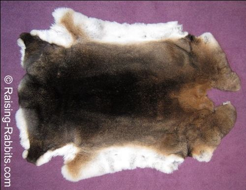 Rabbit Pelts. How to tan rabbit fur, resources, directions, ideas