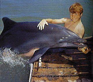 Flipper TV show 1960s.. Filmed at the Miami Seaquarium back when I was a kid, in Miami.
