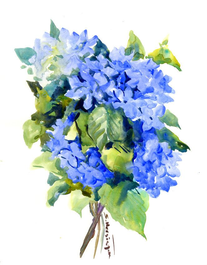 Hydrangea Flowers Original Watercolor Painting Royal Blue Sky Blue Floral Wall Art Art Watercolor Hydrangea Hydrangea Artwork Original Watercolor Painting