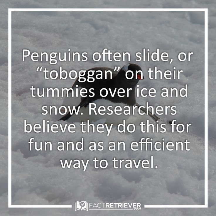 Penguins just wanna have fun!