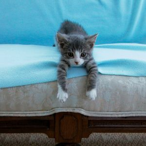 Best 20 Cat Urine Smells Ideas On Pinterest Dog Urine