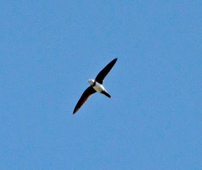 MOUNT ABU BIRDS  MY PERSONAL COLLECTION: Photo Galleries Birds around the house July 2016. ...