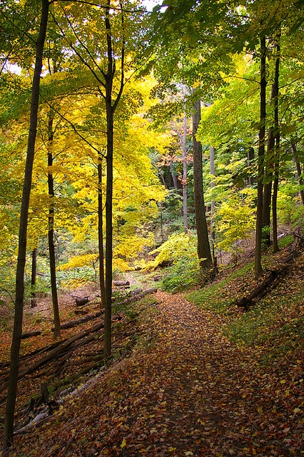 """Also for """"The Road Not Taken"""" (Hendrie Valley Trail, Hamilton Ontario photographed by Vlad Litvinov)"""