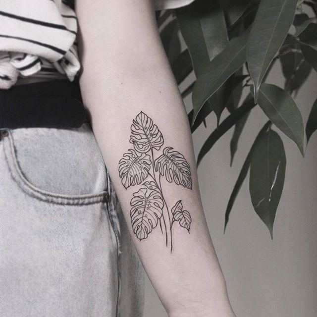 Some liney monstera's for Brittany's first! Such a fun concept . . . . #monstera #plants #floraltattoo #tattoo #btattooing #qttr