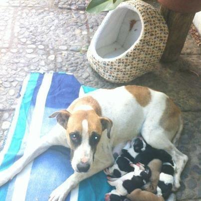 Por ahora, necesitamos alimento de cachorro para la mamá, frazadas y ojalá una casa de perro grande donde ella puede estar tranquila con sus bebés.    Si quieres donar alguna de estas cosas envíanos un mensaje por interno en la página de RDA.    Si quieres hacer donaciones en dinero    Cuenta Rut o Cuenta Vista 15.336.263-7  Banco Estado  Titular: Kristel Garrido  Comprobante de depósito: cuadrille@gmail.com  Asunto: Perrita mamá    SANTIAGO, CHILE