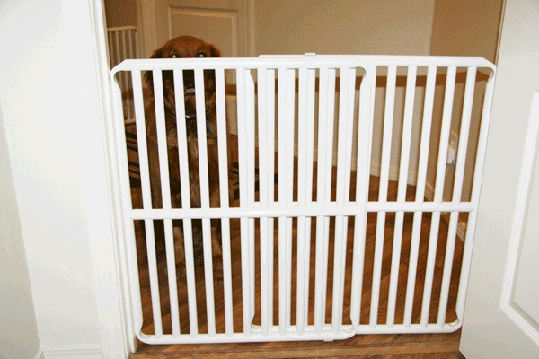 29 Best Images About Cat And Dog Gates On Pinterest