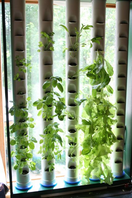 Indoor Aquaponics - the ultimate science fair project! Take a look at the house this guy built. Very interesting
