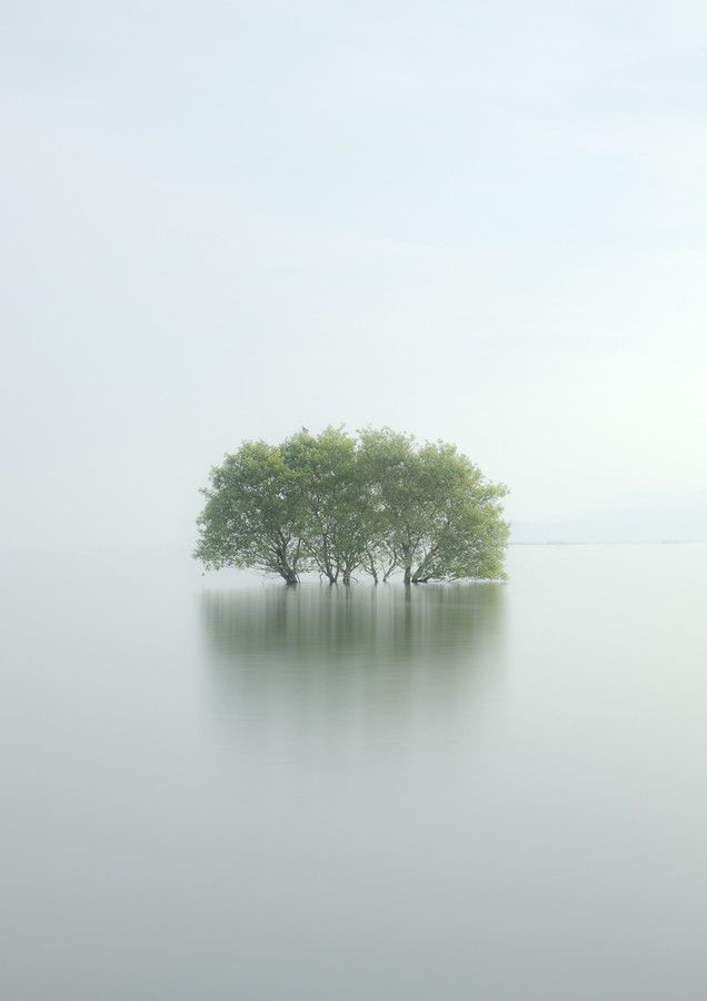 This is REALLY stunning. isolated trees