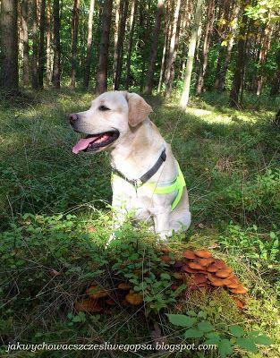 Jak wychować szczęśliwego psa: Na grzyby