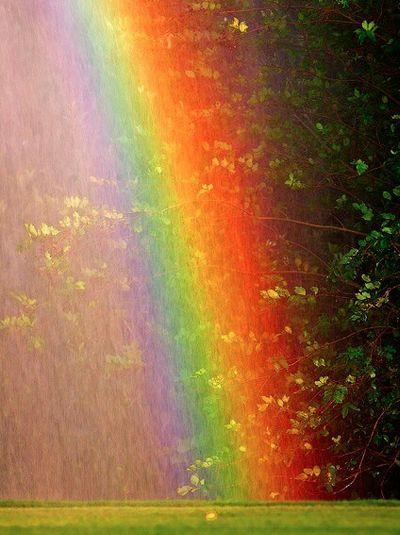 """Voici une activité que les enfants vont adorer : créer un arc-en-ciel dans le jardin ! Une manière amusante et fascinante de démontrer que lorsque la lumière du soleil est projetée sur un """"écran"""" de gouttes d'eau celon un certain angle, l'eau reflète cette lumière en séparant toutes les couleurs qui la compose."""