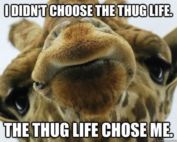 20 Giraffe Memes