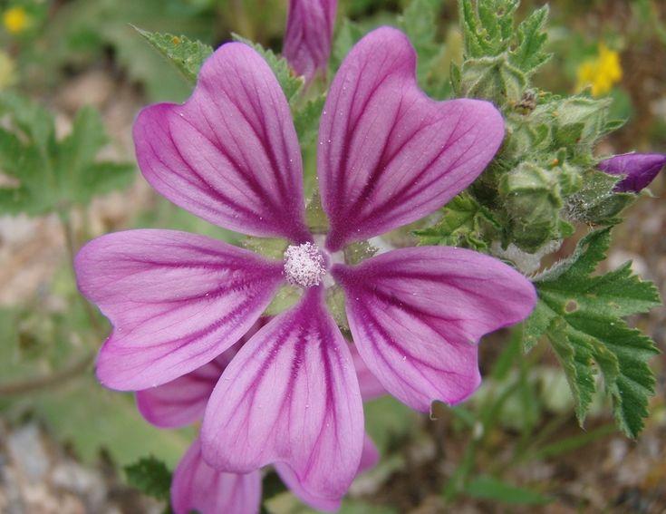 Voici le top 10 des plantes sauvages comestibles ! | Anti inflammatoire naturel, Plantes ...