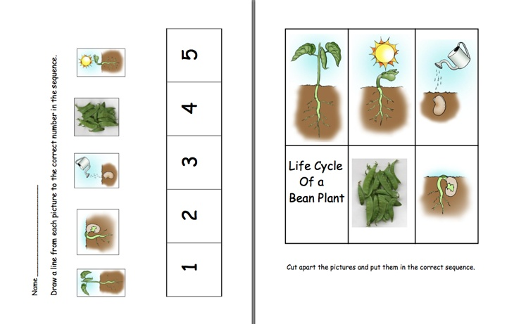 Here's a set of pages on the life cycle of a bean plant.