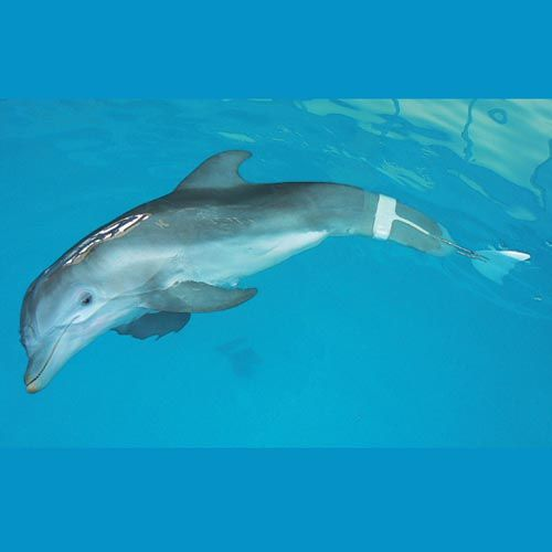 Clearwater, Florida to the Clearwater Marine Aquarium to see Winter the dolphin :)