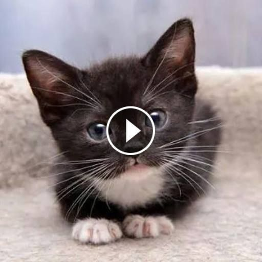 Video Funny Cats And Kittens Meowing Compilation Cute Cats Cat