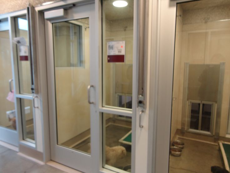 Biteguard Plexidor Kennel Doors In Use Berkeley Animal