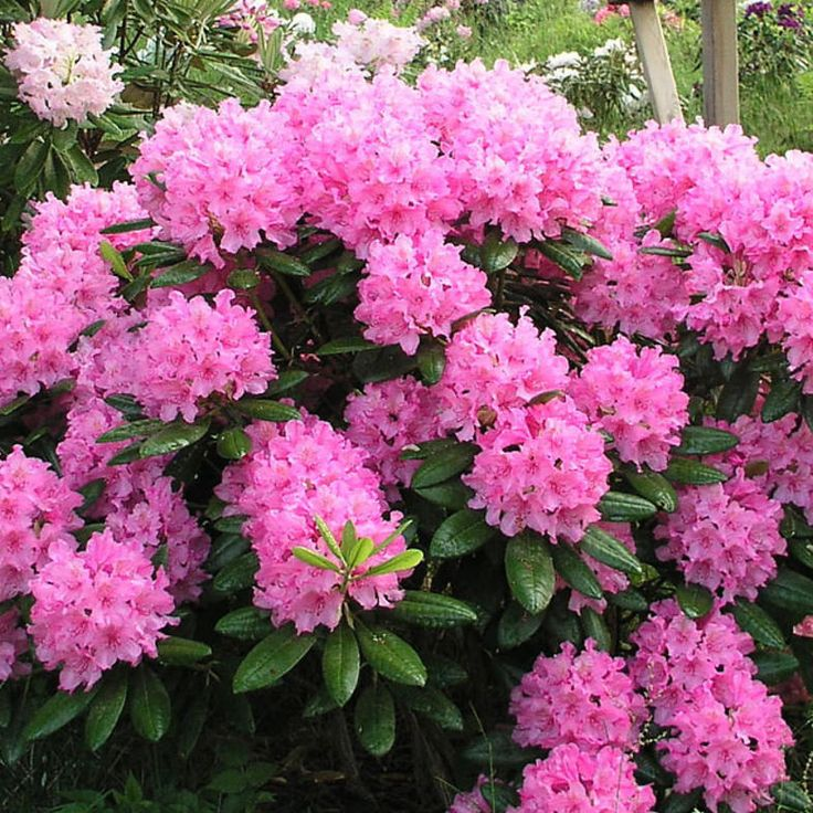 rhododendron mature singles News from world, national, and local news sources, organized to give you in-depth news coverage of sports, entertainment, business, politics, weather, and more.