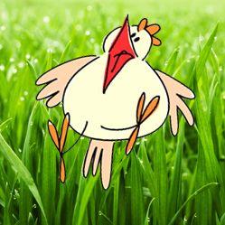 Kip, chicken