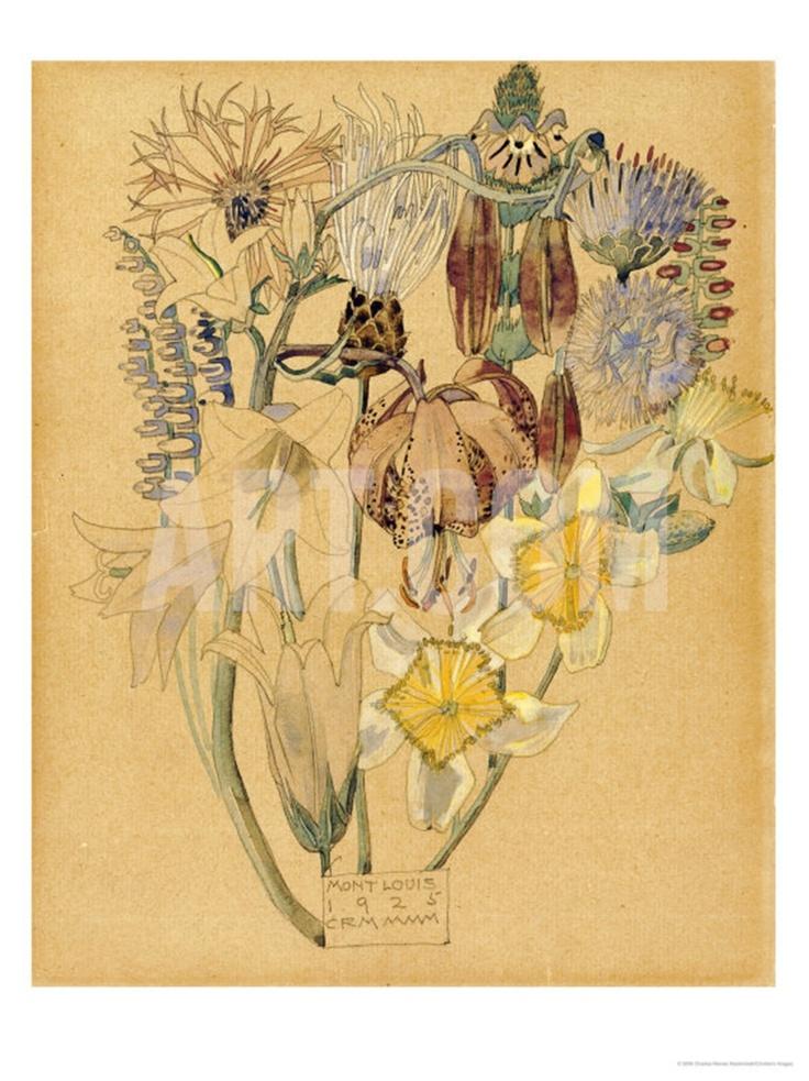 Mont Louis, Flower Study, Charles Rennie Mackintosh